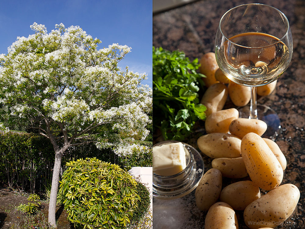 chardonnay-potato-tree-winedinedaily-50.jpg