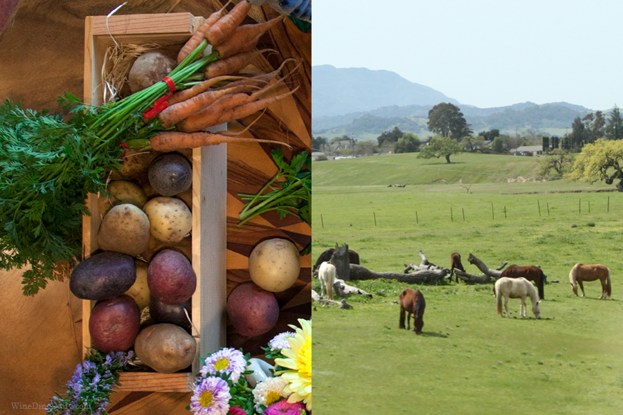 Carrots Horses