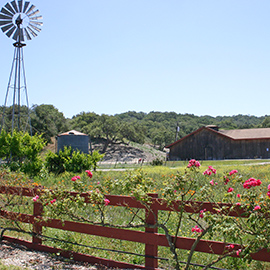 Zaca Mesa Winery Vineyard