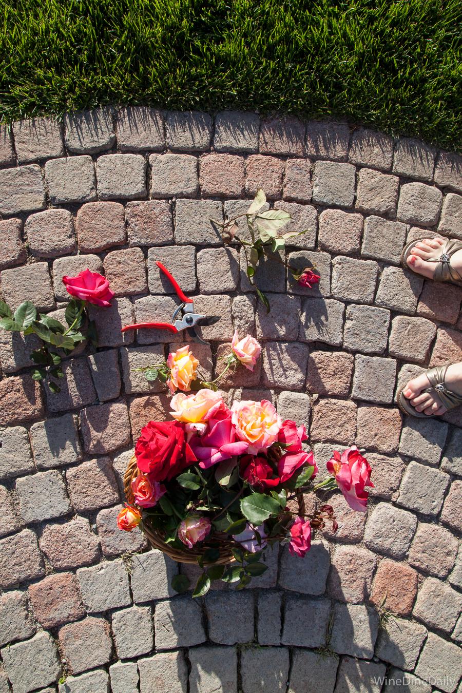 Garden Roses WineDineDaily