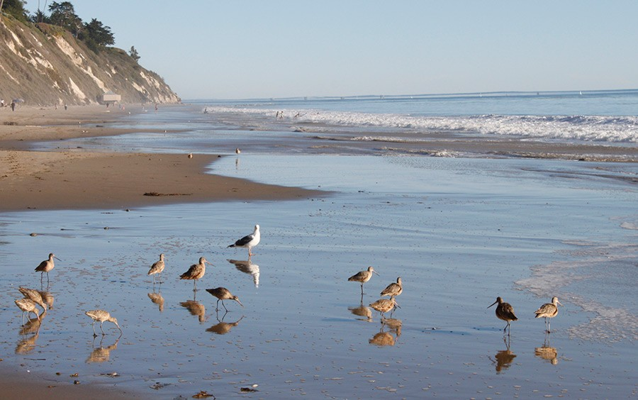 Santa Barbara Beach Birds