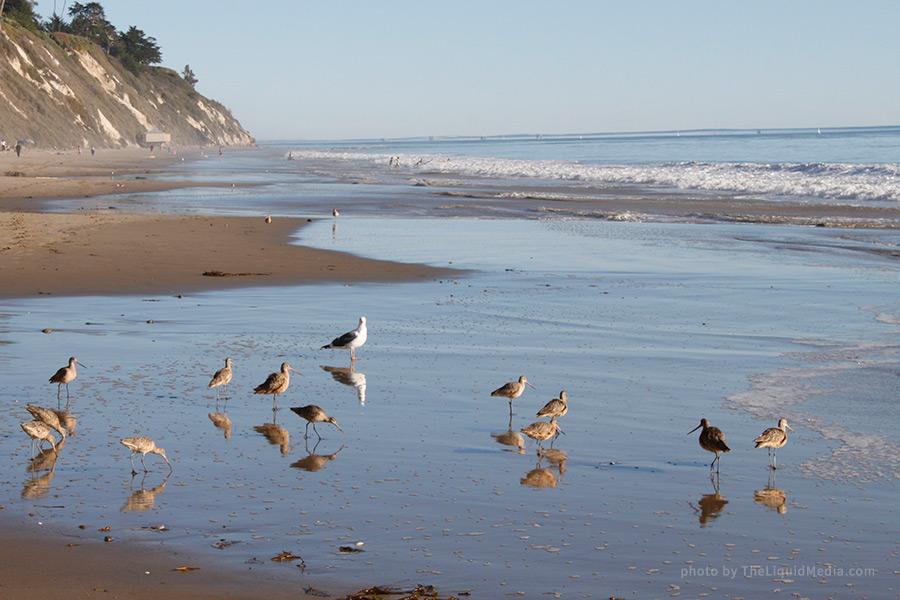 Santa Barbara Beach Birds