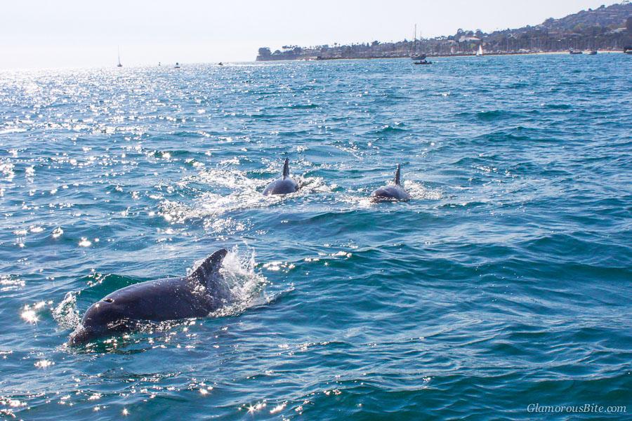 Dolphins Santa Barbara