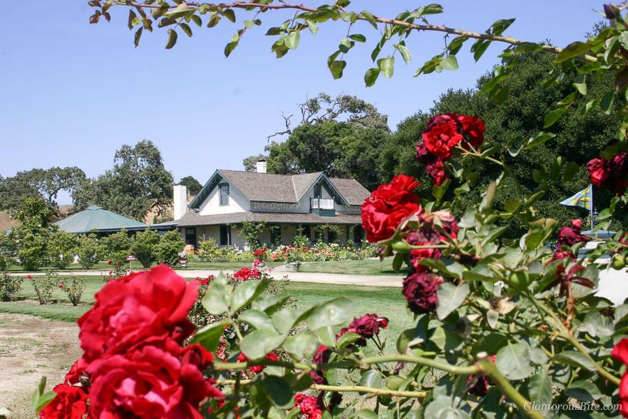 Rideau Vineyard Santa Barbara