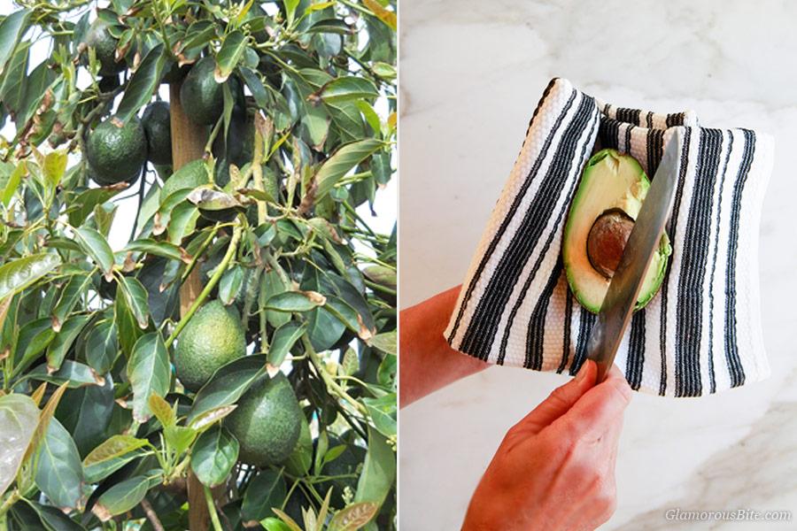 How to open Avocado