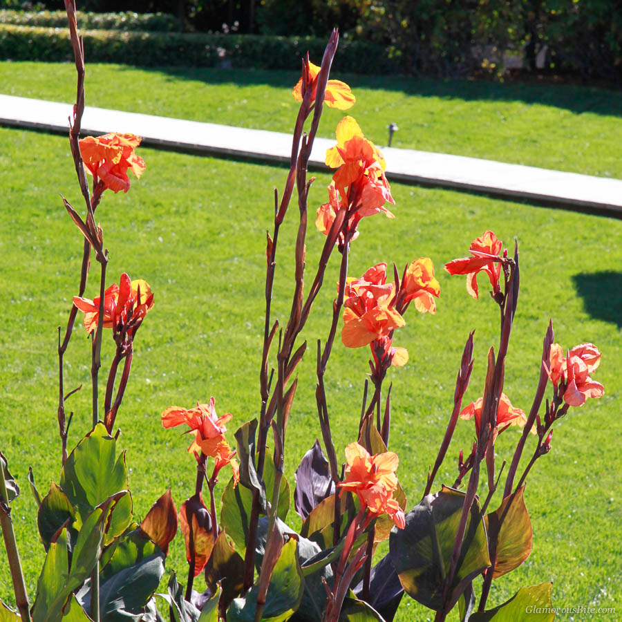Canna Lilies Weekend Bites