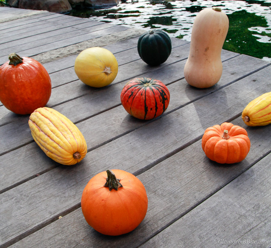 Pumpkin Squash Types