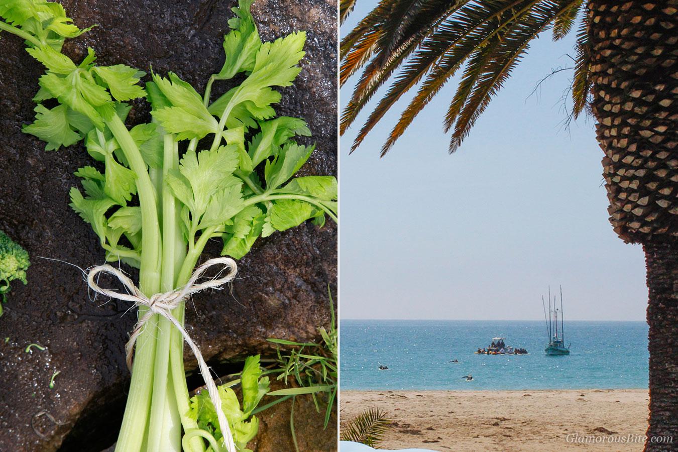 Celery Santa Barbara Beach